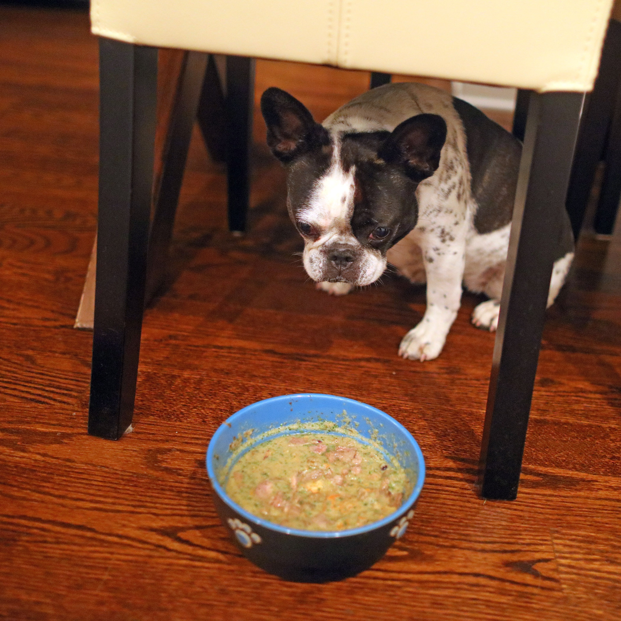 Where Can I Buy Fromm Dog Food Online