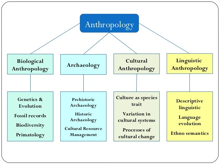 branches of social anthropology