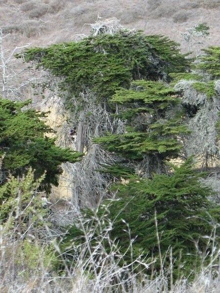 Дерево на котором находится гнездо