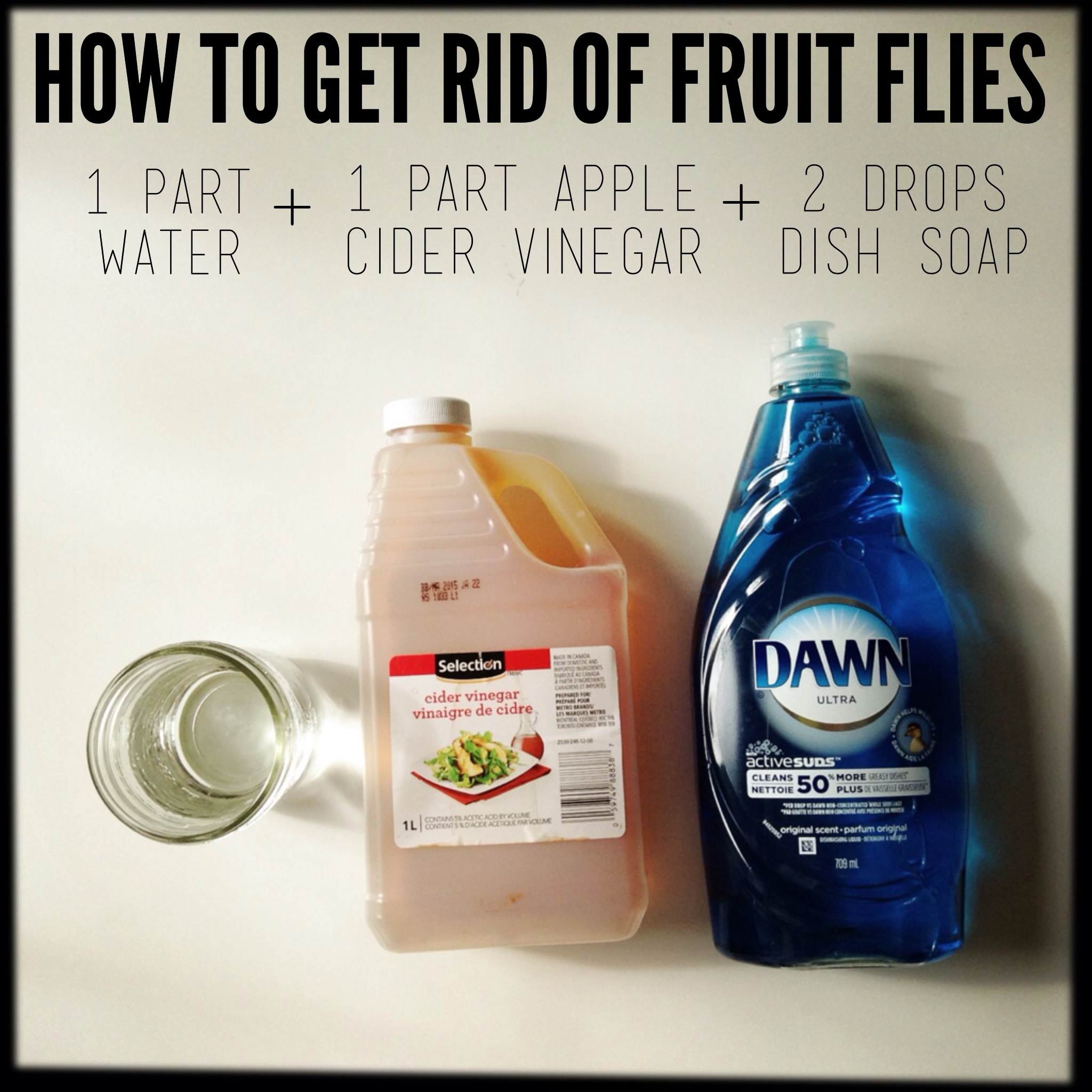 For What It\'s Worth: How to zap a fruit fly infestation. · Inkfish ...