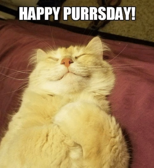 Image result for it's purrsday images