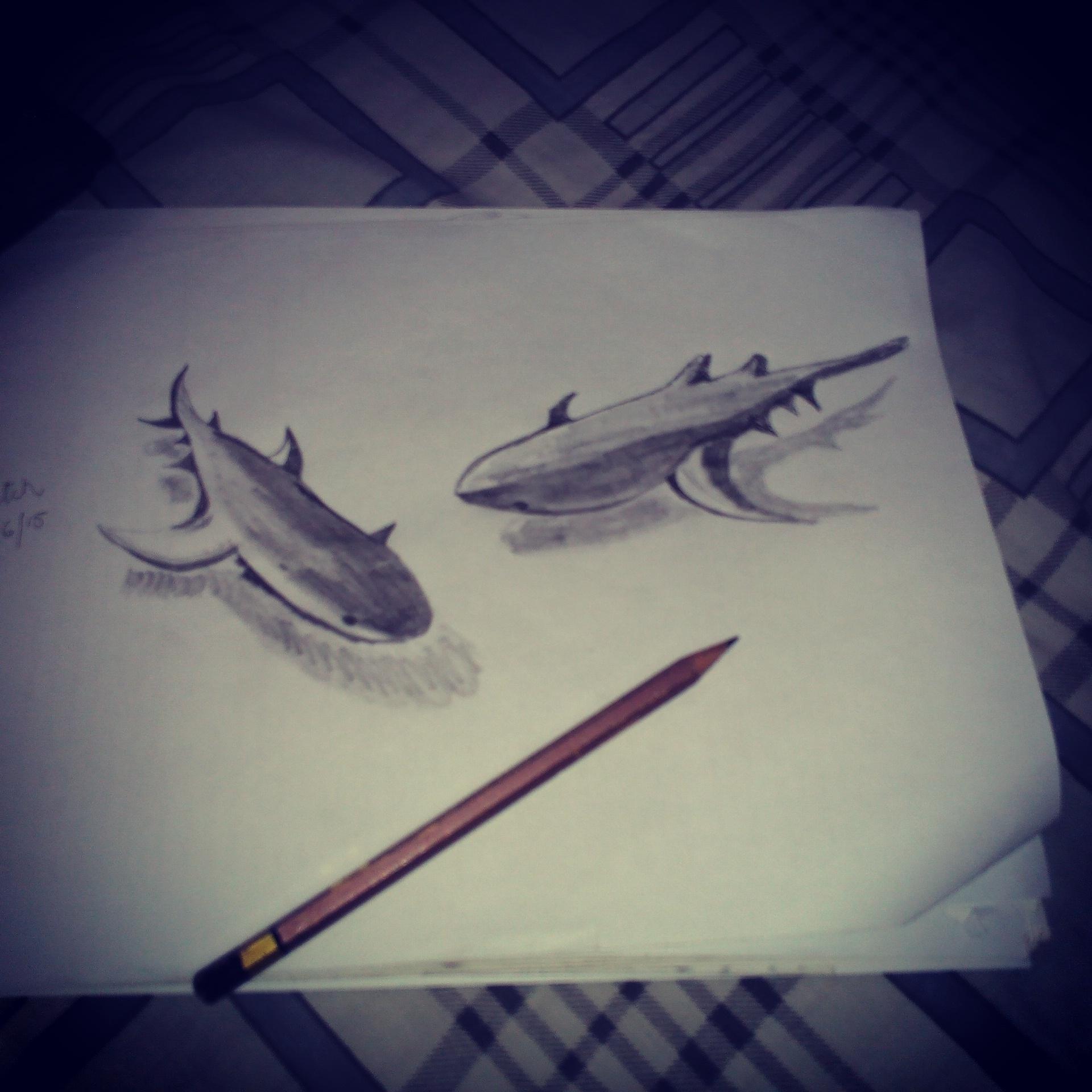 Shark 3d pencil sketch view hide