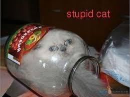 Image result for dumb cat