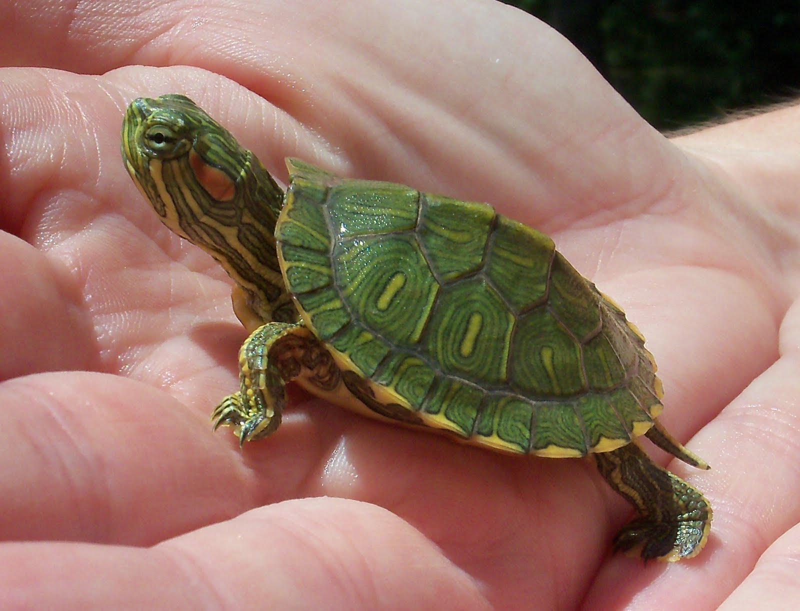 How to care for a turtle