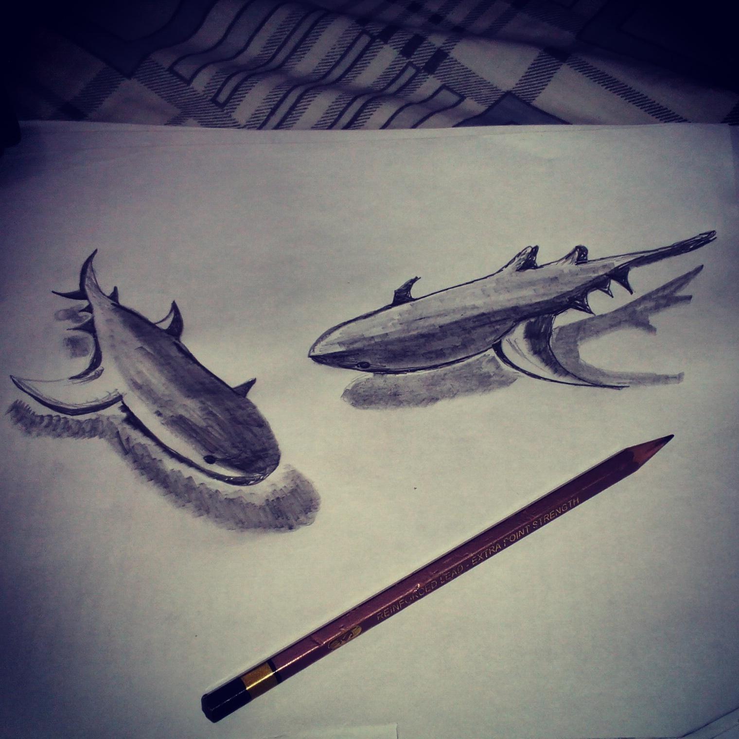 Shark 3d pencil sketch