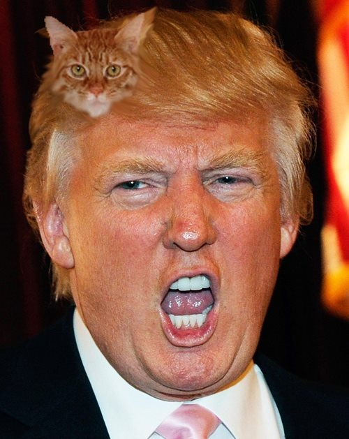 Image result for cat on head